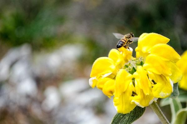 Πασχαλινές Ευχές από την Αγροδιατροφική Σύμπραξη Περιφέρειας Κρήτης